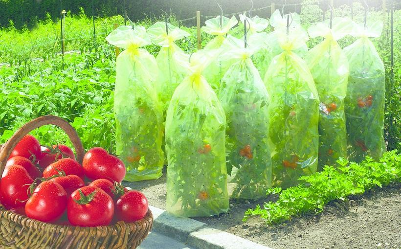 Покривало за домати Nortene TOMATOTUBE