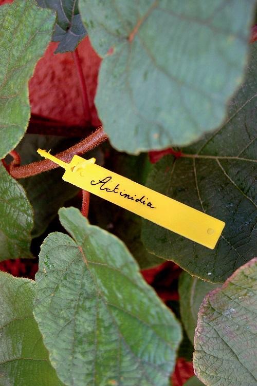 Висящи етикети Nortene TREE LABEL 40бр.